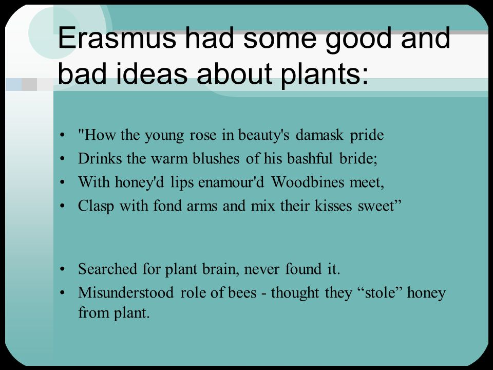 Erasmus had some good and bad ideas about plants: