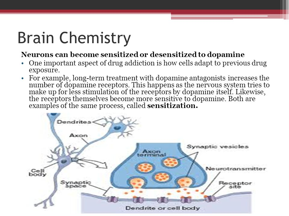 Brain Chemistry Neurons can become sensitized or desensitized to dopamine.