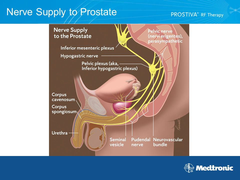 Nerve Supply to Prostate