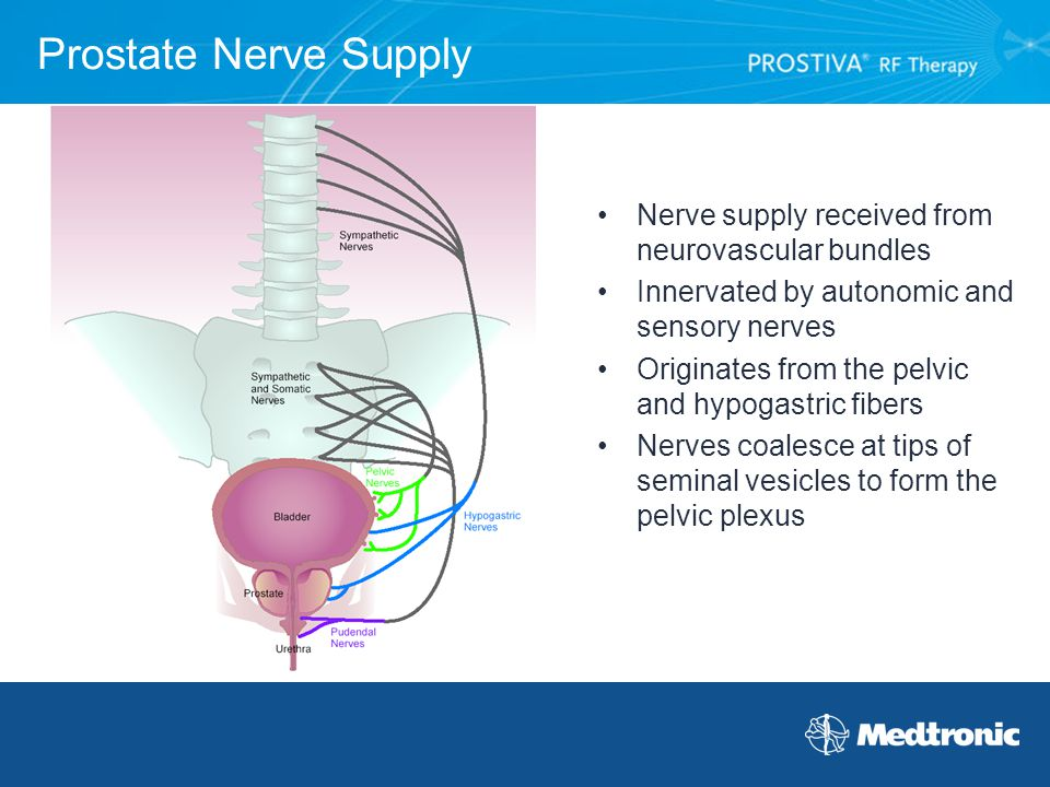 Prostate Nerve Supply Nerve supply received from neurovascular bundles