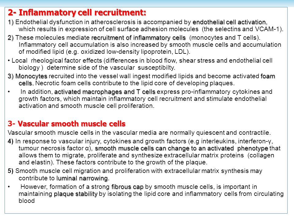 2- Inflammatory cell recruitment: