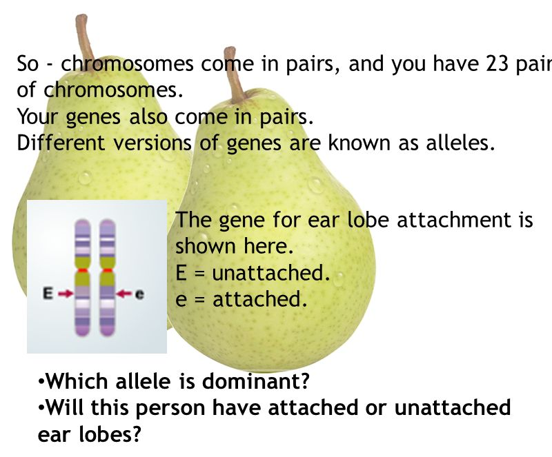 So - chromosomes come in pairs, and you have 23 pairs of chromosomes.