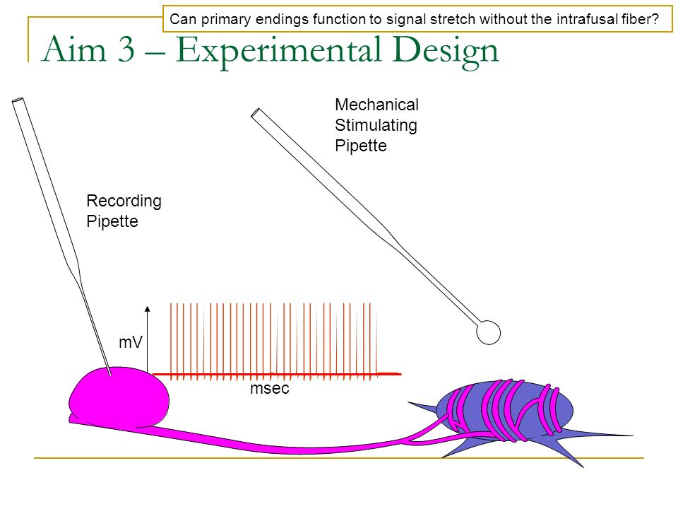 Aim 3 – Experimental Design