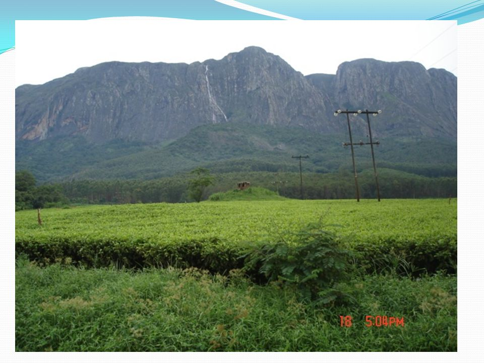 TOURIST ATTRACTIONS – Mulanje mountain with tea fields in the background.