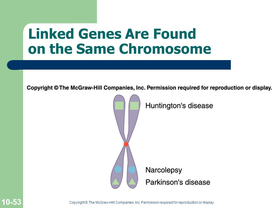Linked Genes Are Found on the Same Chromosome