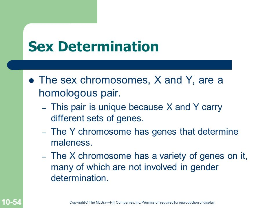 Sex Determination The sex chromosomes, X and Y, are a homologous pair.