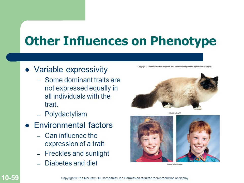 Other Influences on Phenotype