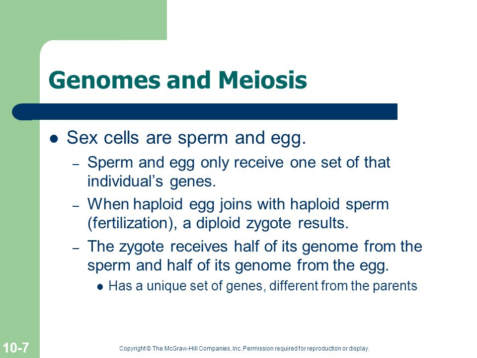 Genomes and Meiosis Sex cells are sperm and egg.