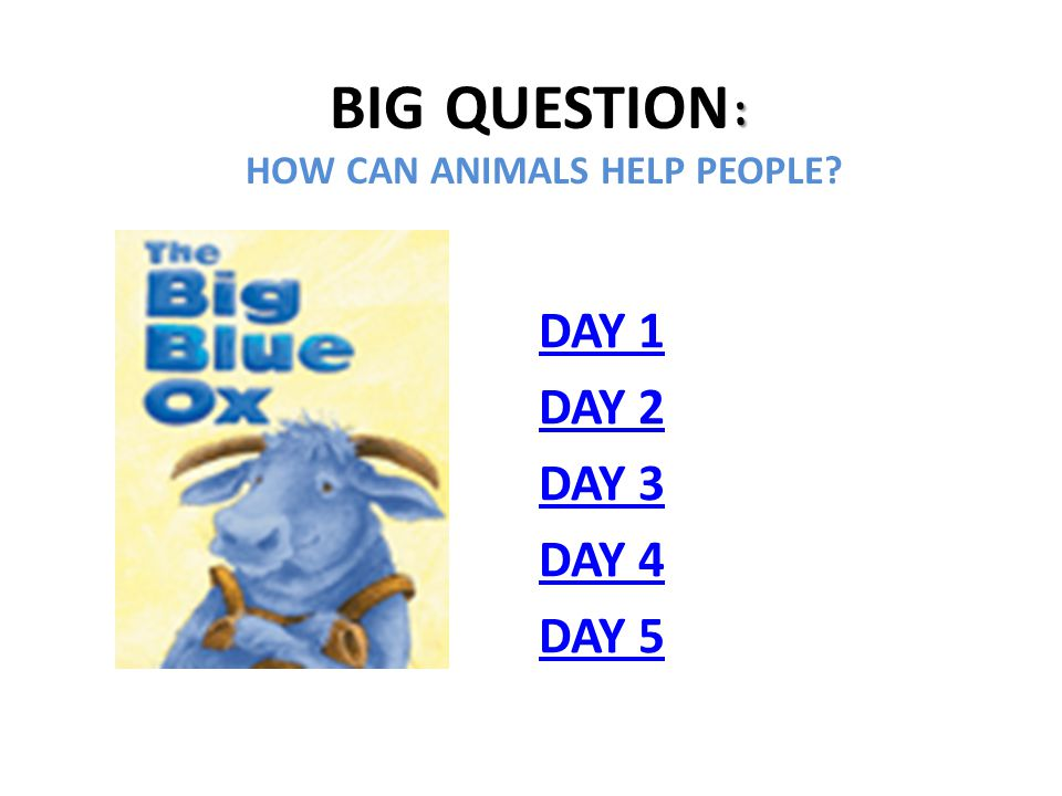 Big Question: How can animals help people