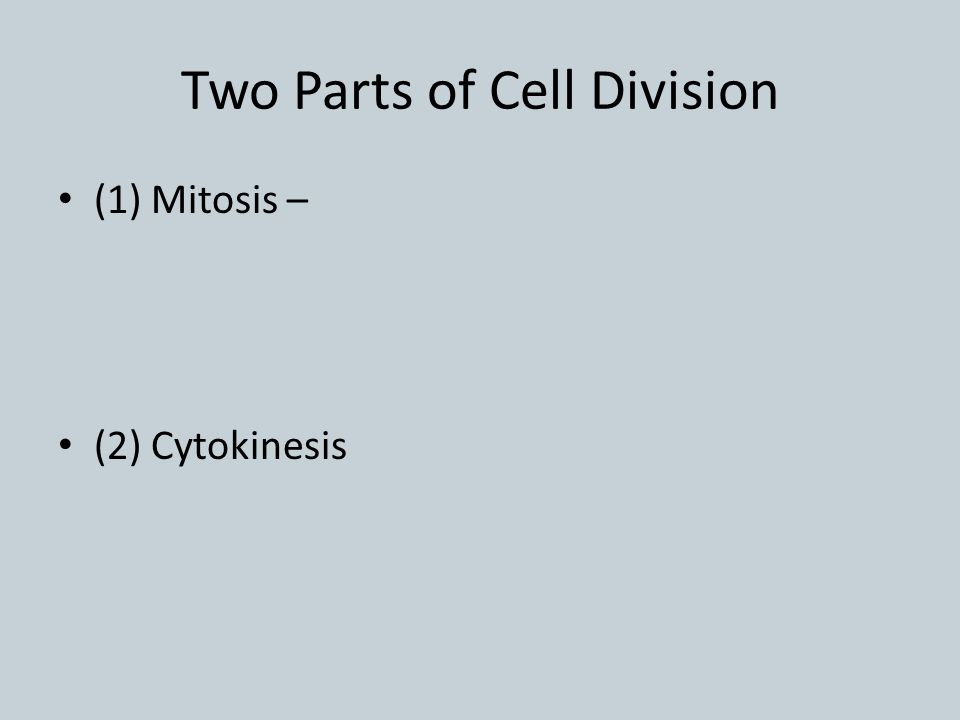 Two Parts of Cell Division