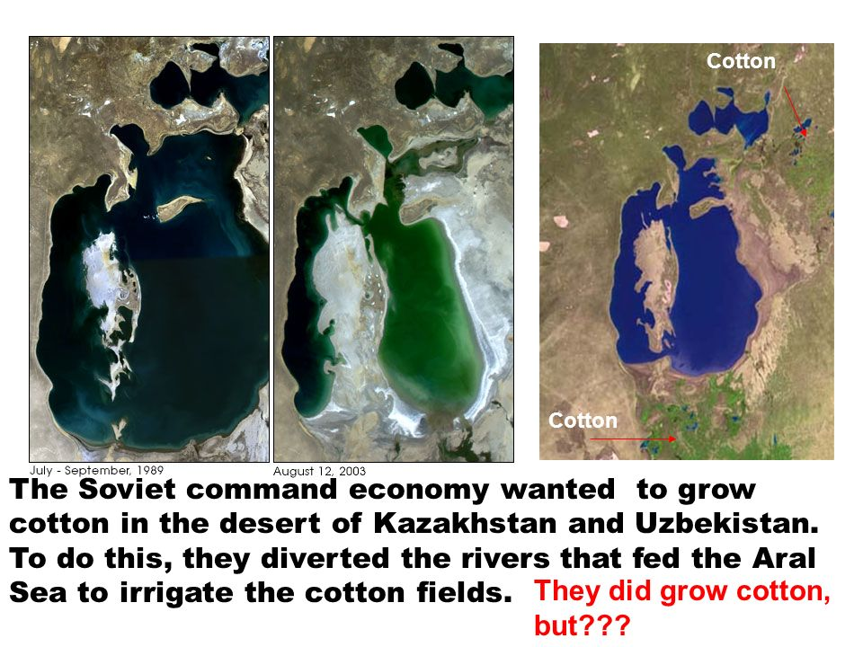 They did grow cotton, but