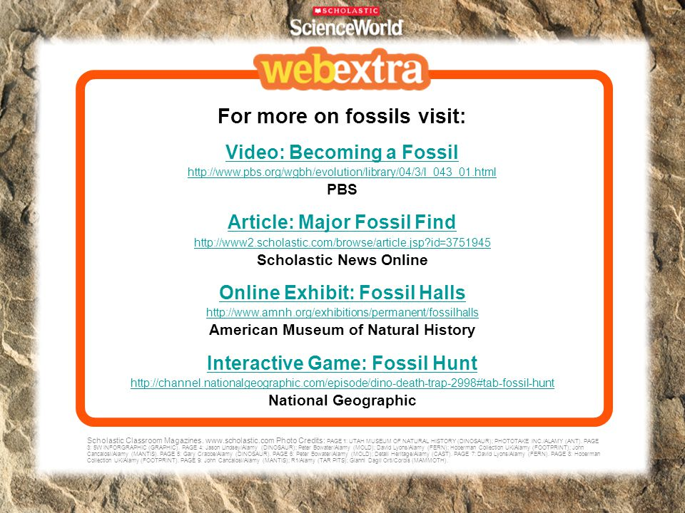 For more on fossils visit: