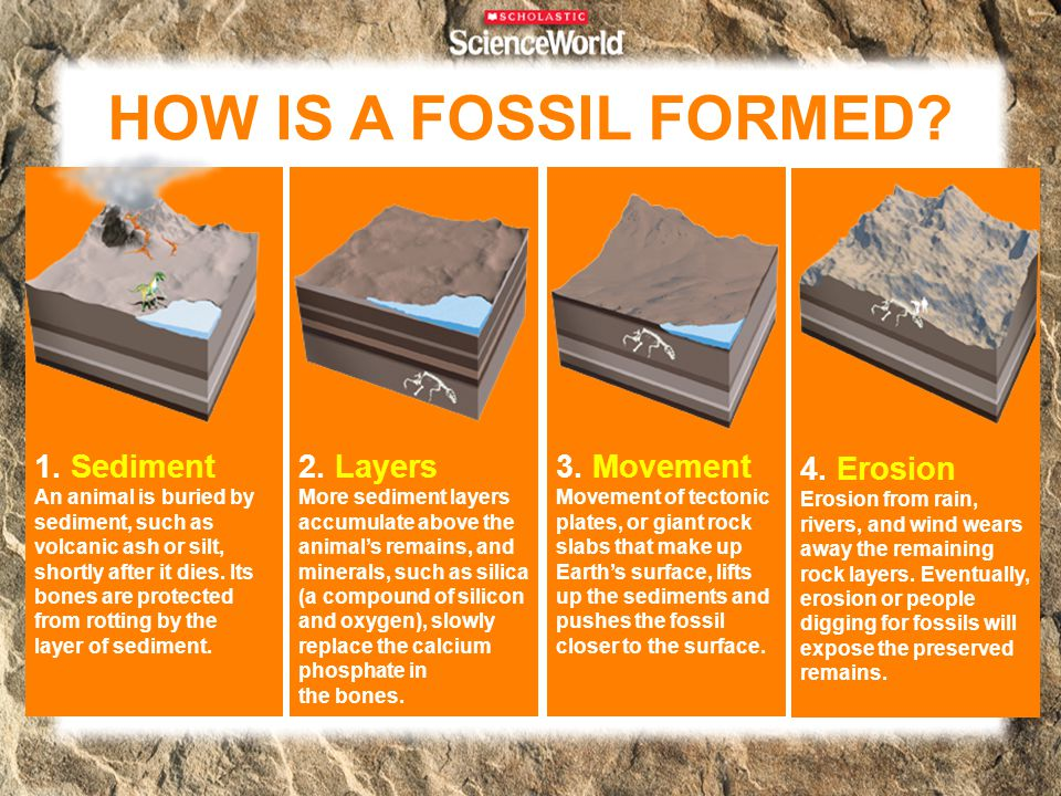 HOW IS A FOSSIL FORMED 1. Sediment 2. Layers 3. Movement 4. Erosion