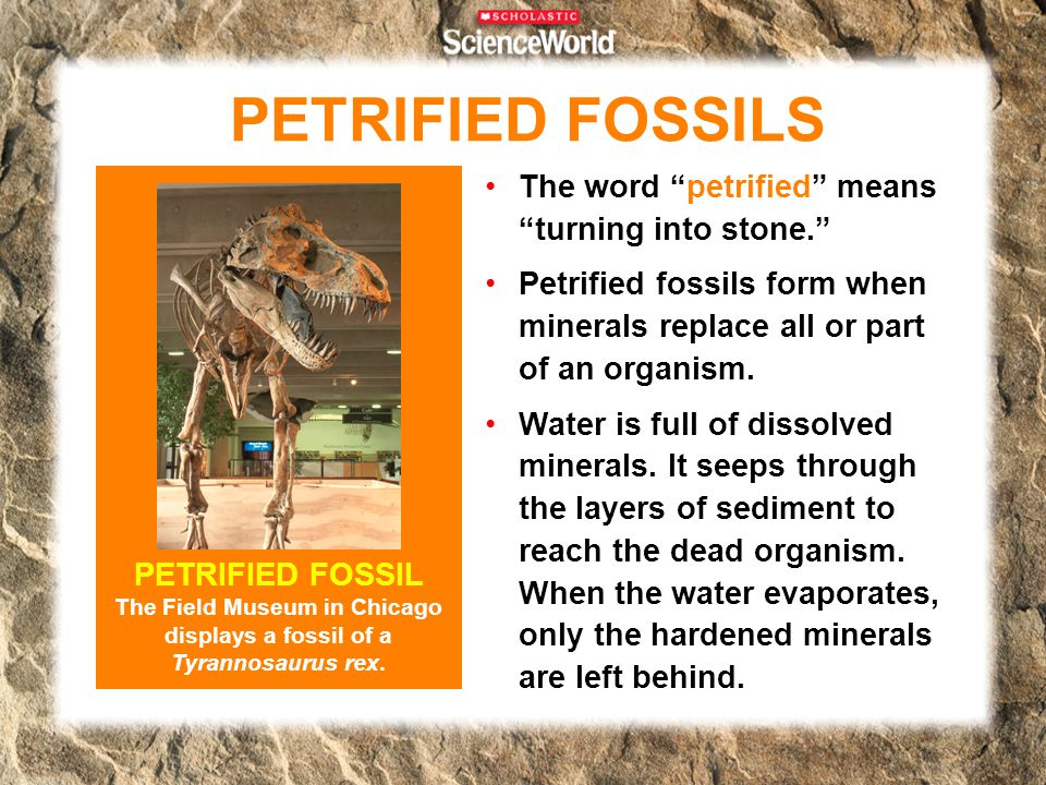 PETRIFIED FOSSILS The word petrified means turning into stone.