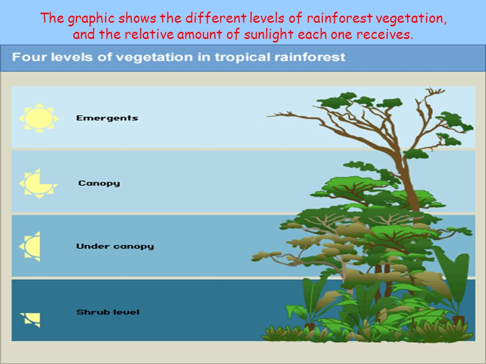 The graphic shows the different levels of rainforest vegetation, and the relative amount of sunlight each one receives.