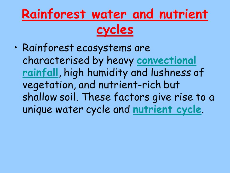 Rainforest water and nutrient cycles