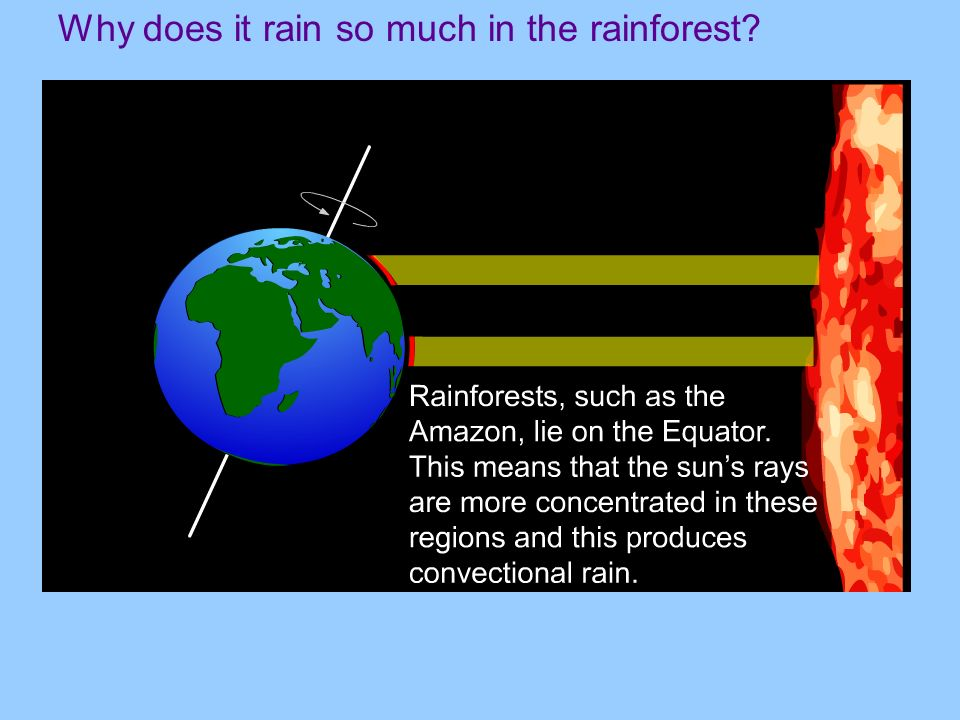 Why does it rain so much in the rainforest