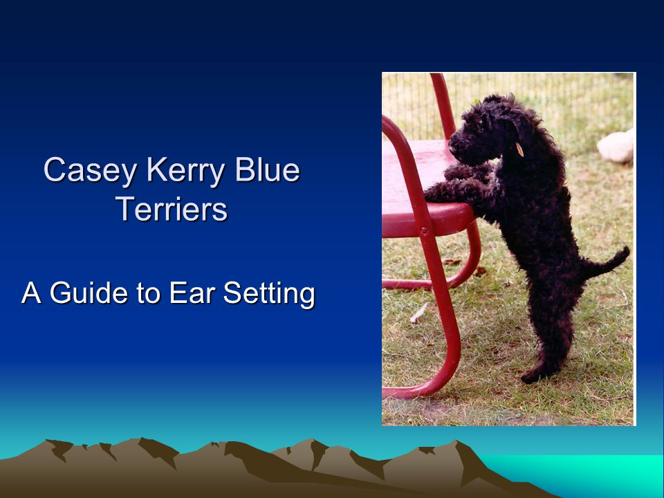 Casey Kerry Blue Terriers