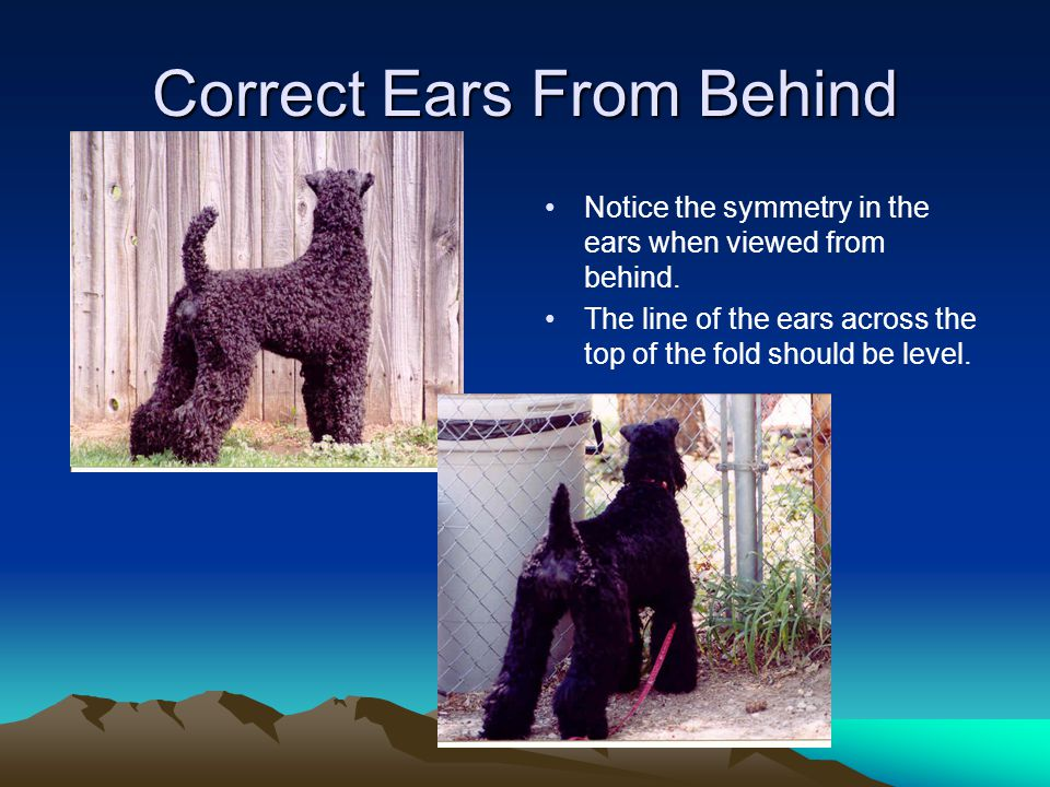 Correct Ears From Behind
