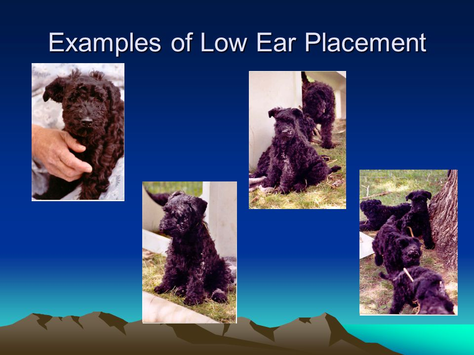 Examples of Low Ear Placement