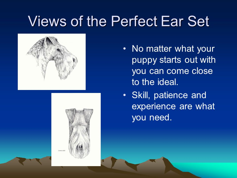 Views of the Perfect Ear Set