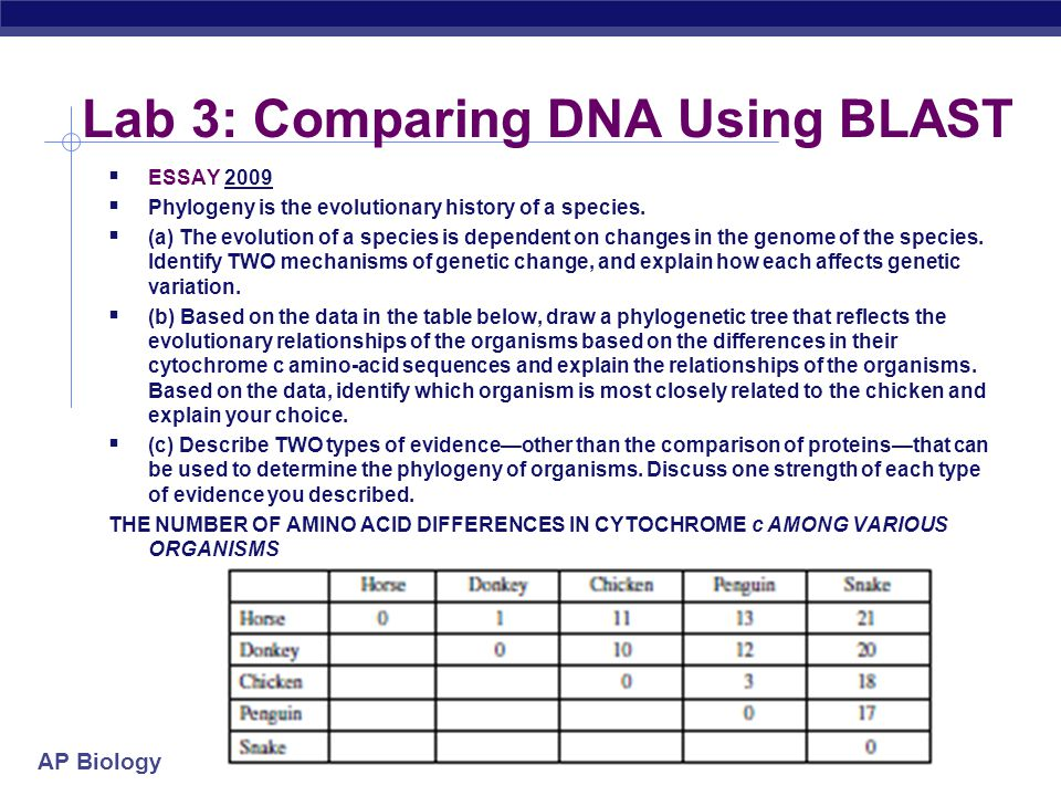 Lab 3: Comparing DNA Using BLAST