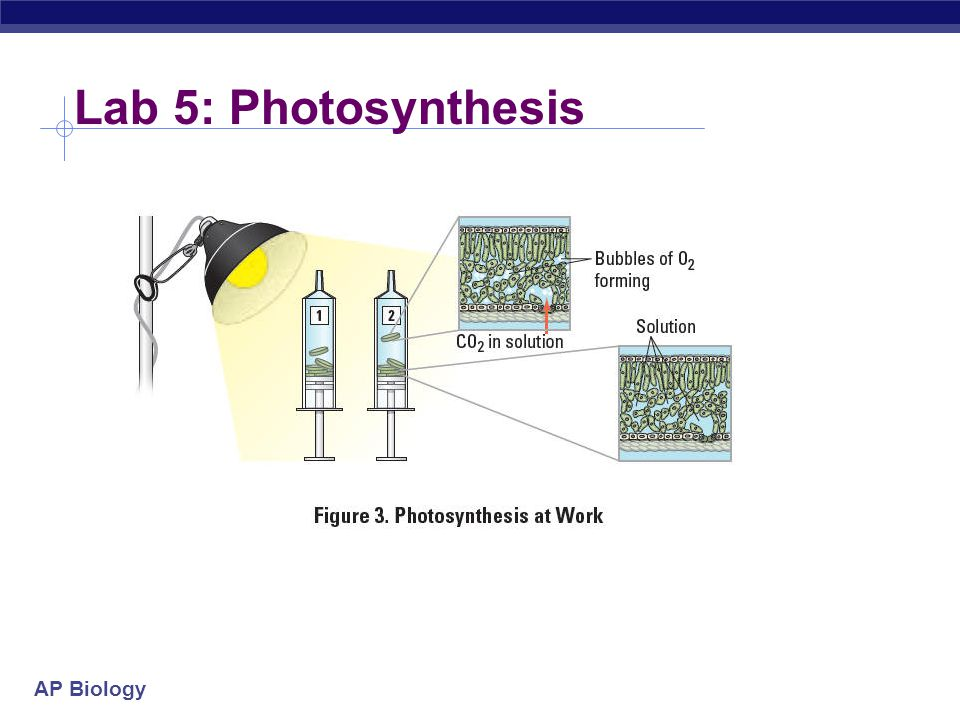 Lab 5: Photosynthesis