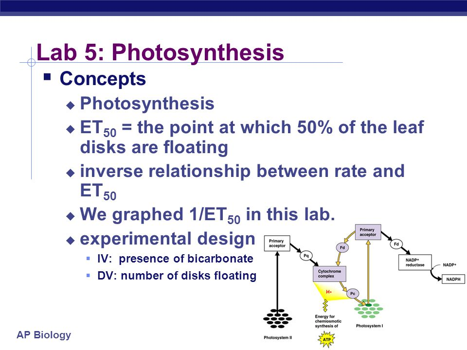 Lab 5: Photosynthesis Concepts Photosynthesis