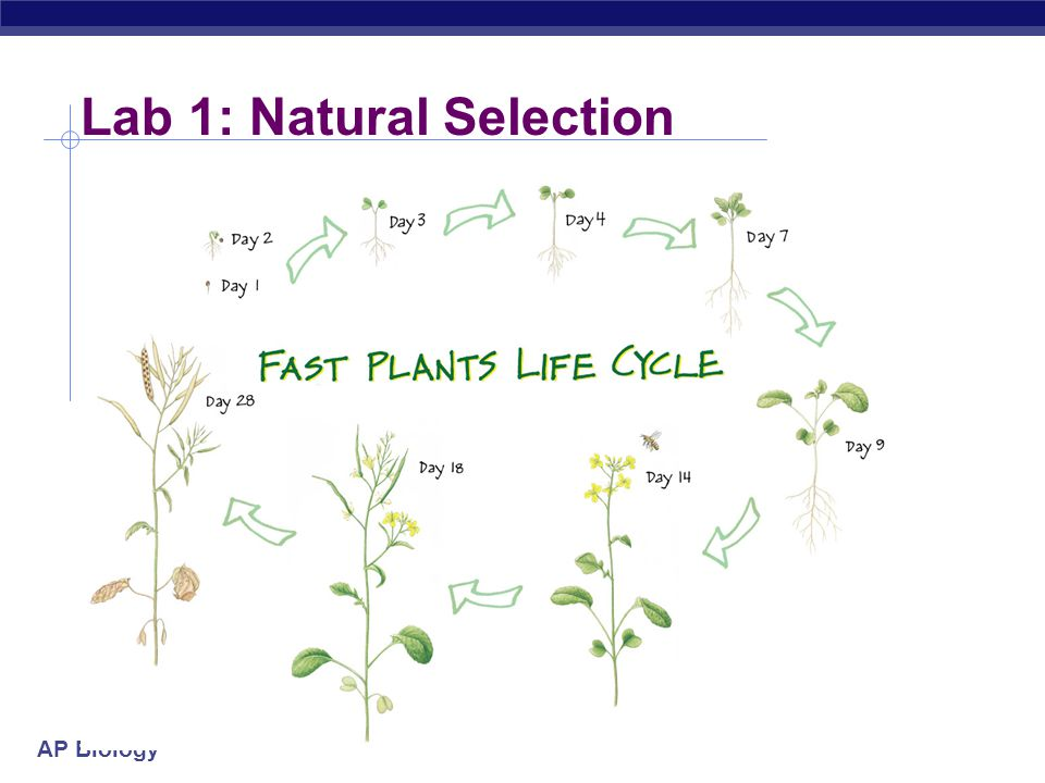 Lab 1: Natural Selection