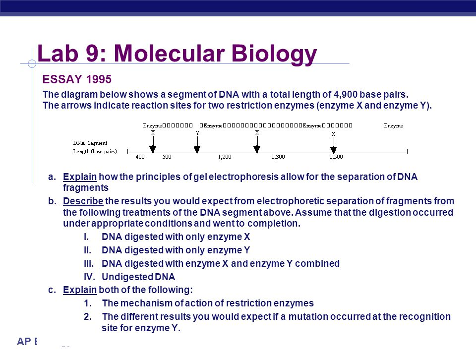 Lab 9: Molecular Biology
