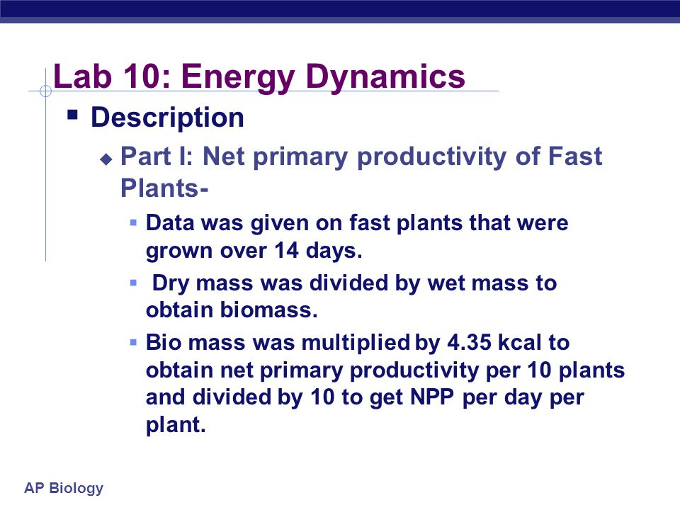 Lab 10: Energy Dynamics Description