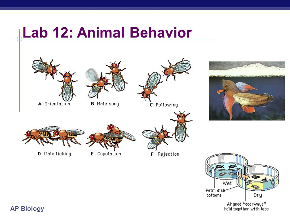 Lab 12: Animal Behavior