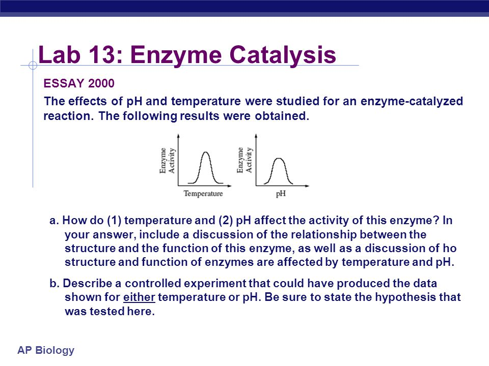 Lab 13: Enzyme Catalysis ESSAY 2000