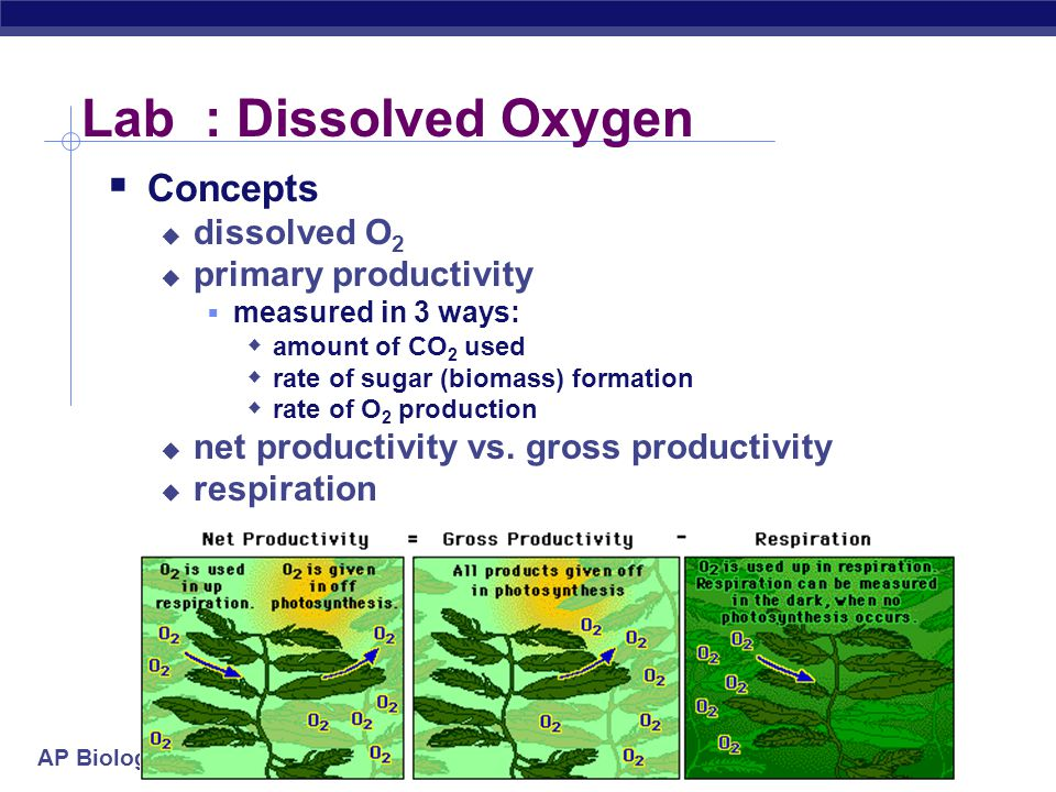 Lab : Dissolved Oxygen Concepts dissolved O2 primary productivity