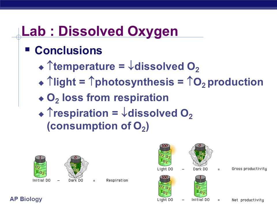 Lab : Dissolved Oxygen Conclusions temperature = dissolved O2