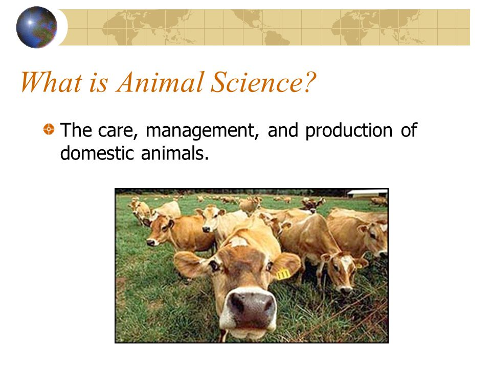 What is Animal Science The care, management, and production of domestic animals.
