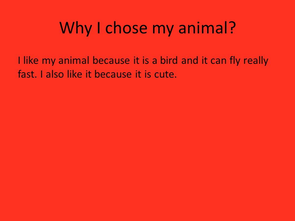 Why I chose my animal. I like my animal because it is a bird and it can fly really fast.