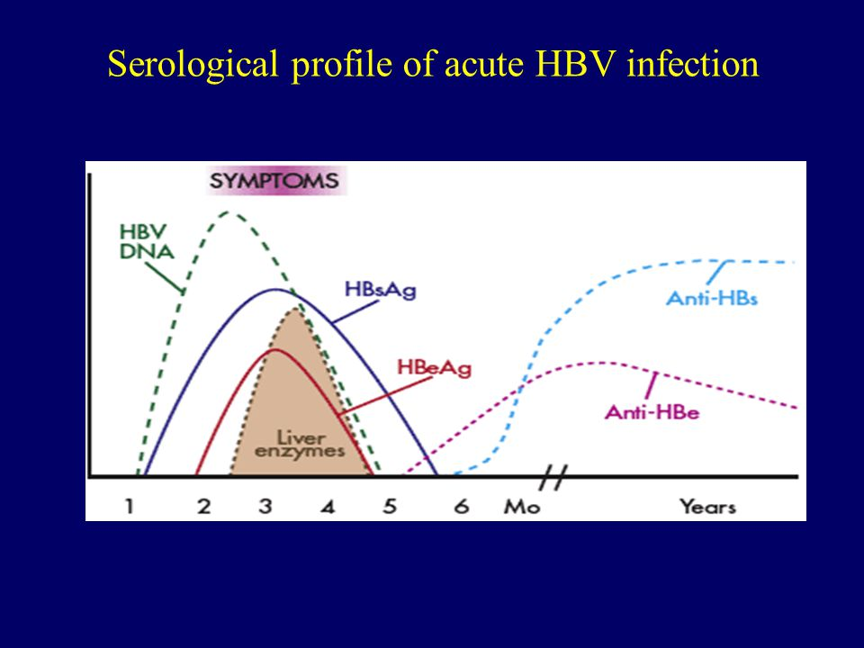 Serological profile of acute HBV infection