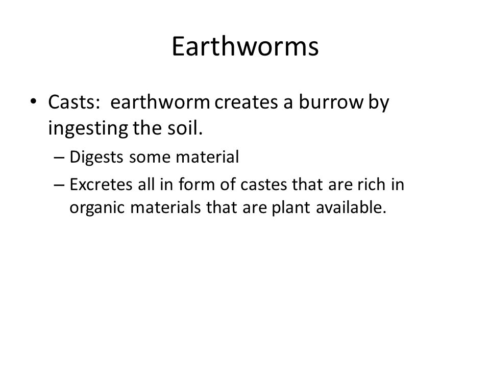 Earthworms Casts: earthworm creates a burrow by ingesting the soil.