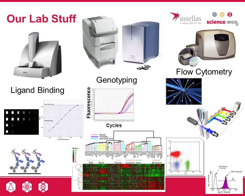 Our Lab Stuff Flow Cytometry Genotyping Ligand Binding Fluorescence