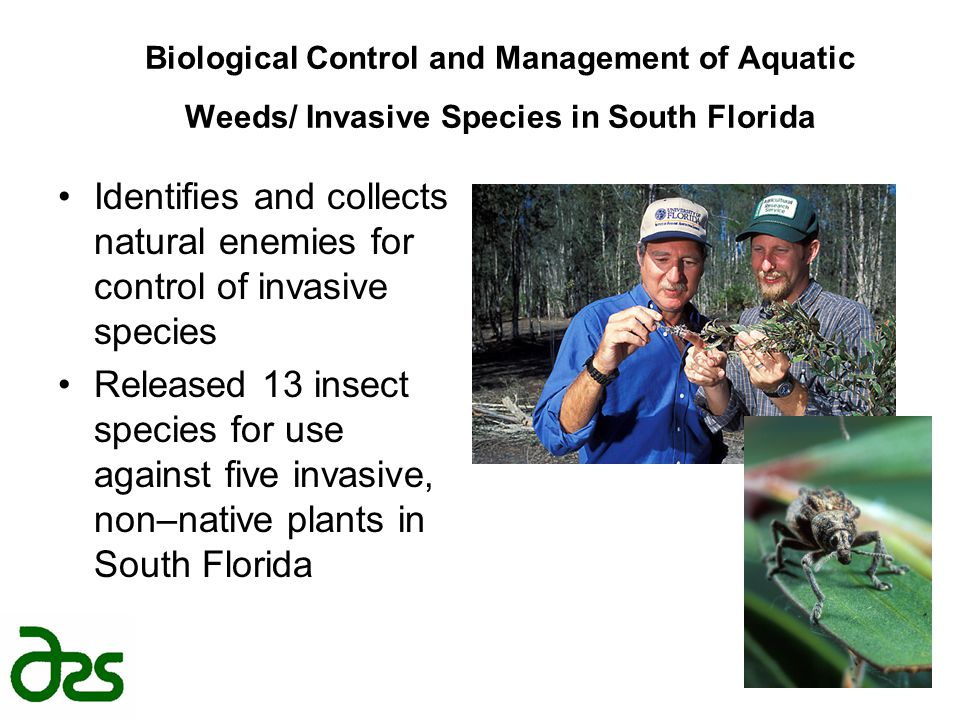 Biological Control and Management of Aquatic Weeds/ Invasive Species in South Florida