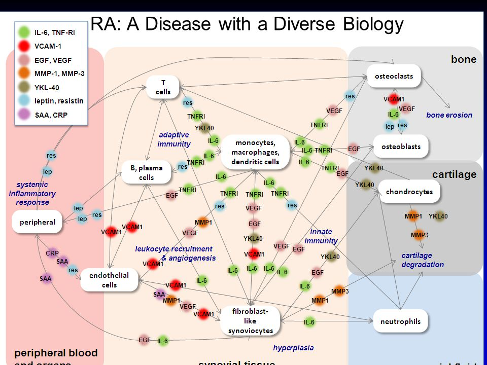 RA: A Disease with a Diverse Biology