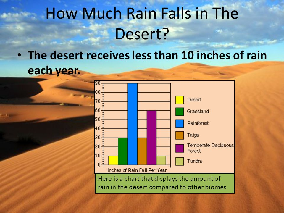 How Much Rain Falls in The Desert