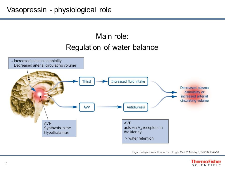 Regulation of water balance