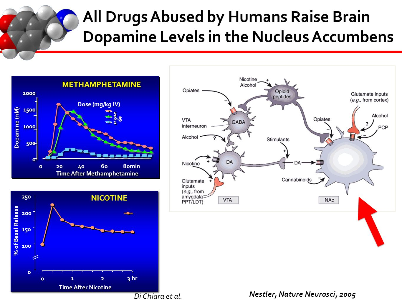 All Drugs Abused by Humans Raise Brain Dopamine Levels in the Nucleus Accumbens