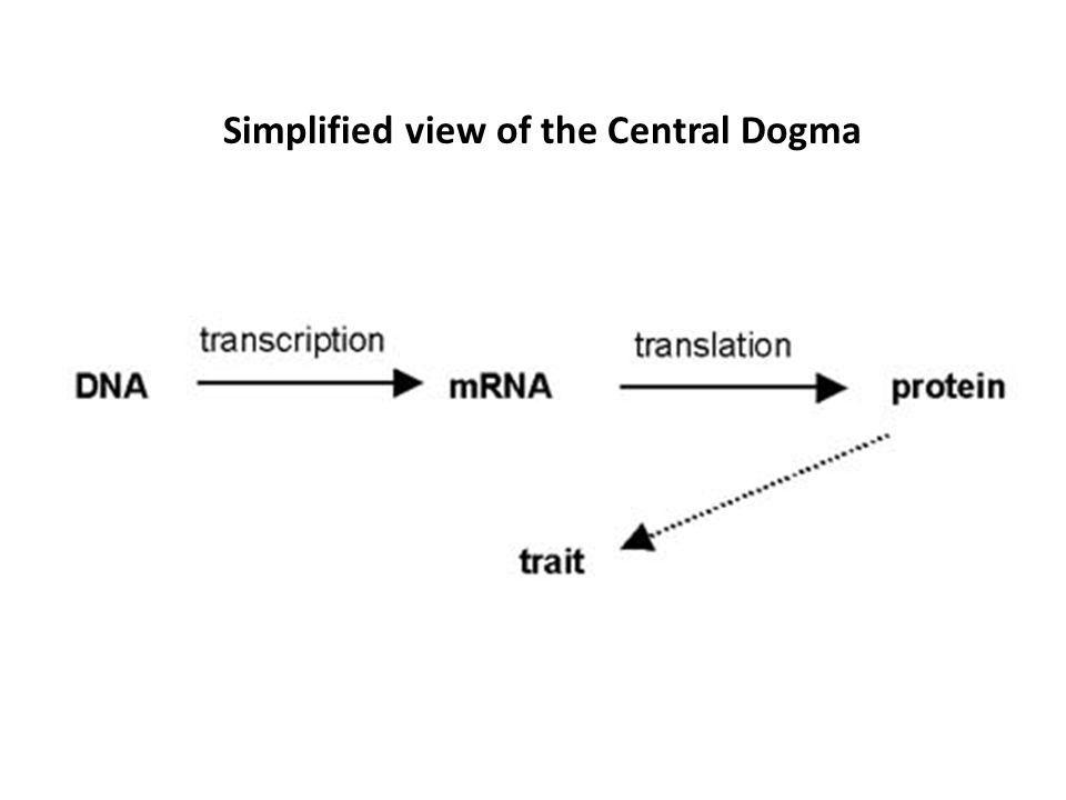 Simplified view of the Central Dogma