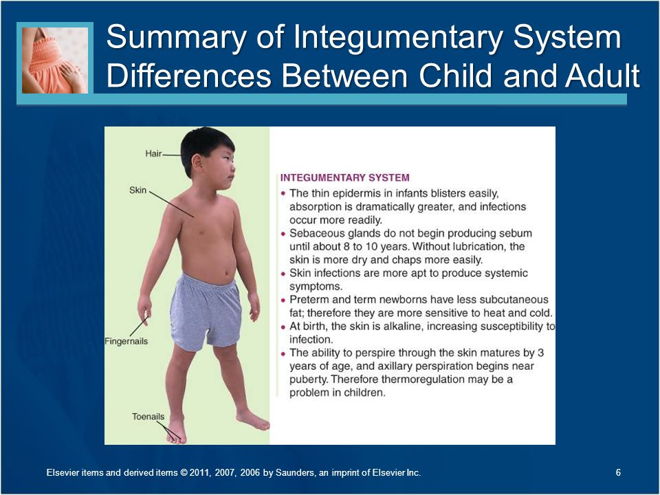 Summary of Integumentary System Differences Between Child and Adult