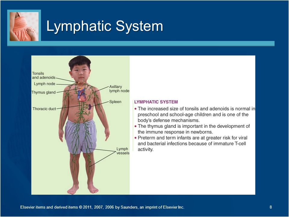 Lymphatic System Discuss Figure 27-1 on page 626.