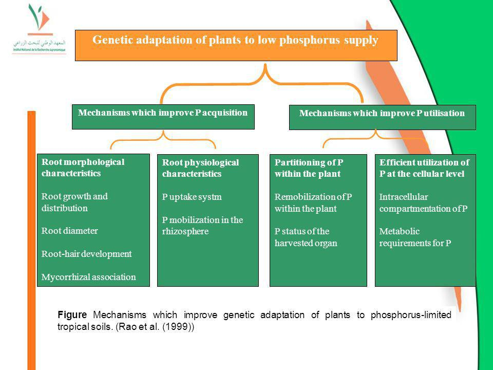 Genetic adaptation of plants to low phosphorus supply