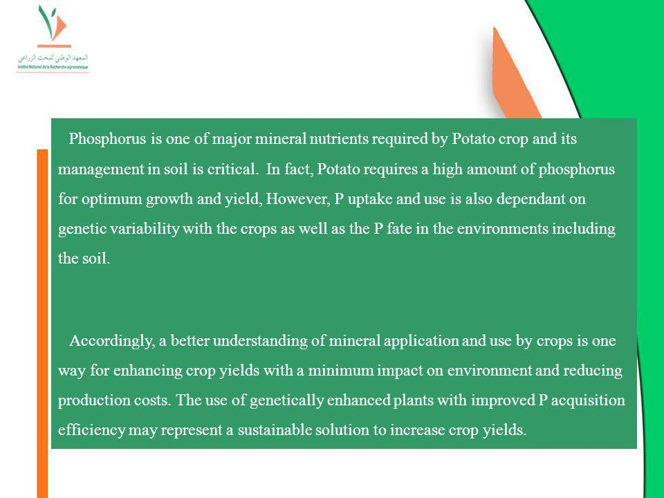 Phosphorus is one of major mineral nutrients required by Potato crop and its management in soil is critical. In fact, Potato requires a high amount of phosphorus for optimum growth and yield, However, P uptake and use is also dependant on genetic variability with the crops as well as the P fate in the environments including the soil.